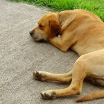adopt an older dog. looking for a new pet, death of an old pet, Judy Helm Wright, pet grief coach. pet bereavement coach. health issues of older dogs, enjoy your older dog, why adopt an older animal, where to find an older animal, www.deathofmypet.com lonly dog, depressed dog, sad dog