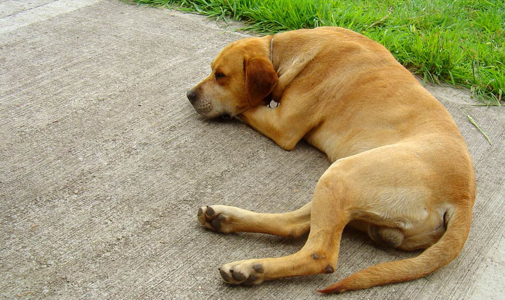 Why Do Older Dogs Get Anxious