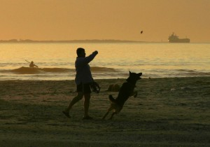 Playing with my best friend at the beach. German Shepherd dogs, dogs and students, how dogs communicate, animal human connection, dogs as pets, my dog,scientific information on communication of animals, connecting with animals, post on animal/human communication and connection